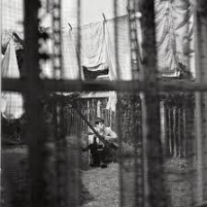 Chaos and Creation in the Backyard, Музыкальный Портал α
