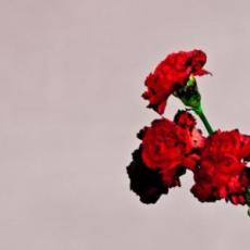 Love in the Future, Музыкальный Портал α