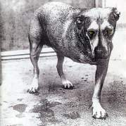 Обложка альбома Alice in Chains, Музыкальный Портал α