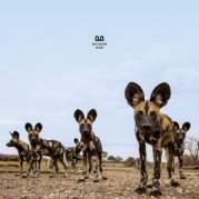 Обложка альбома Original, Музыкальный Портал α