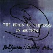 The Brain of the Dog in Section, Музыкальный Портал α