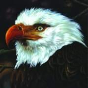 The Hawk Is Howling, Музыкальный Портал α