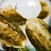 Обложка альбома Засусаль, Музыкальный Портал α